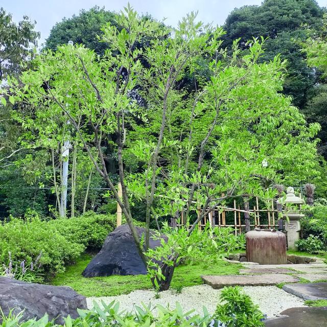 f:id:tosshii-plants:20210814150455j:image