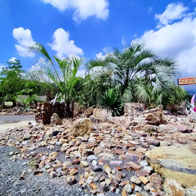 f:id:tosshii-plants:20210905133633j:image