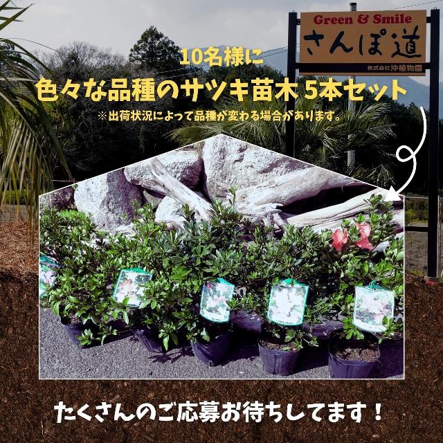 f:id:tosshii-plants:20210922214926j:image
