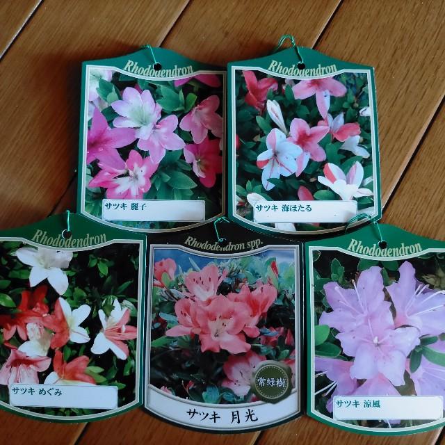 f:id:tosshii-plants:20210923165243j:image