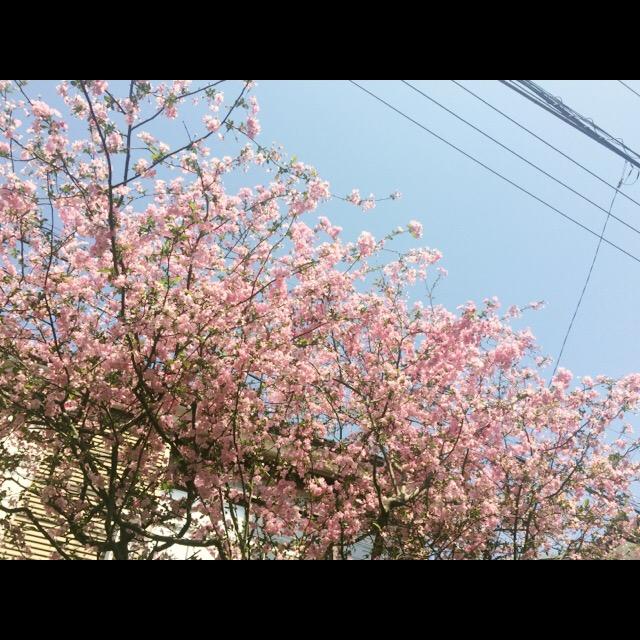 f:id:totemonemuiyo:20170414194415j:plain