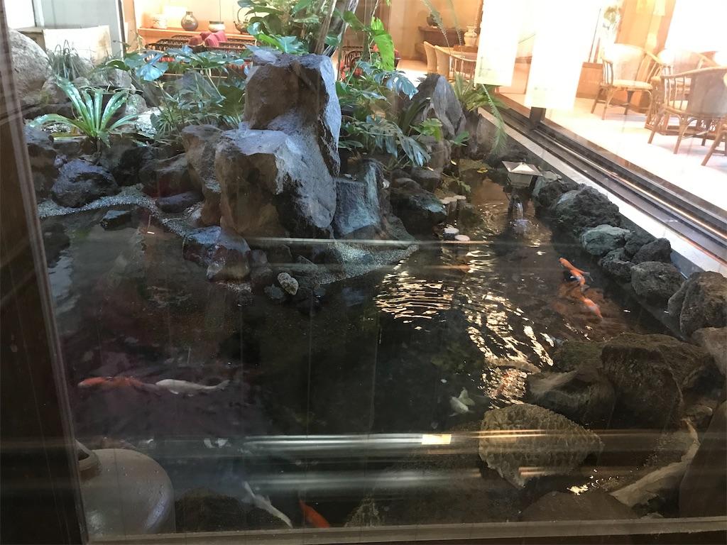 鯉が泳いでいます