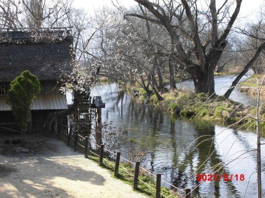 蓼川の水車