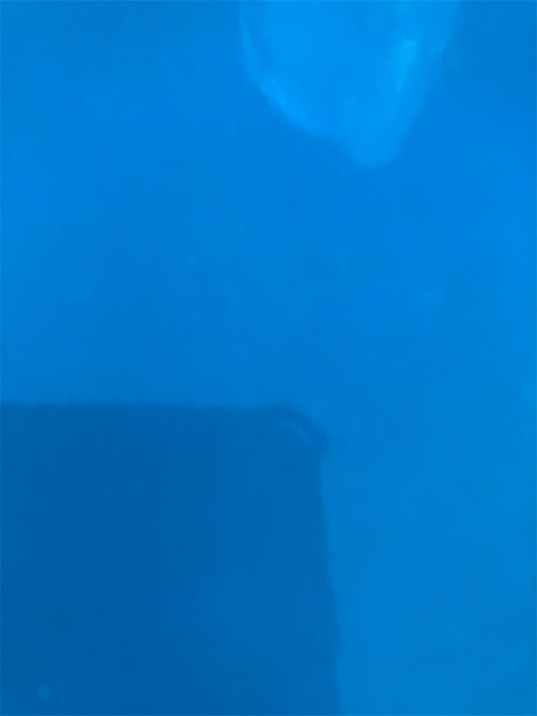 f:id:totoridojopichi:20210510060444j:image