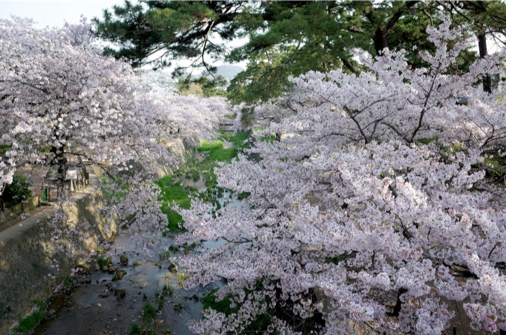 f:id:totorotabi:20170415084723j:image