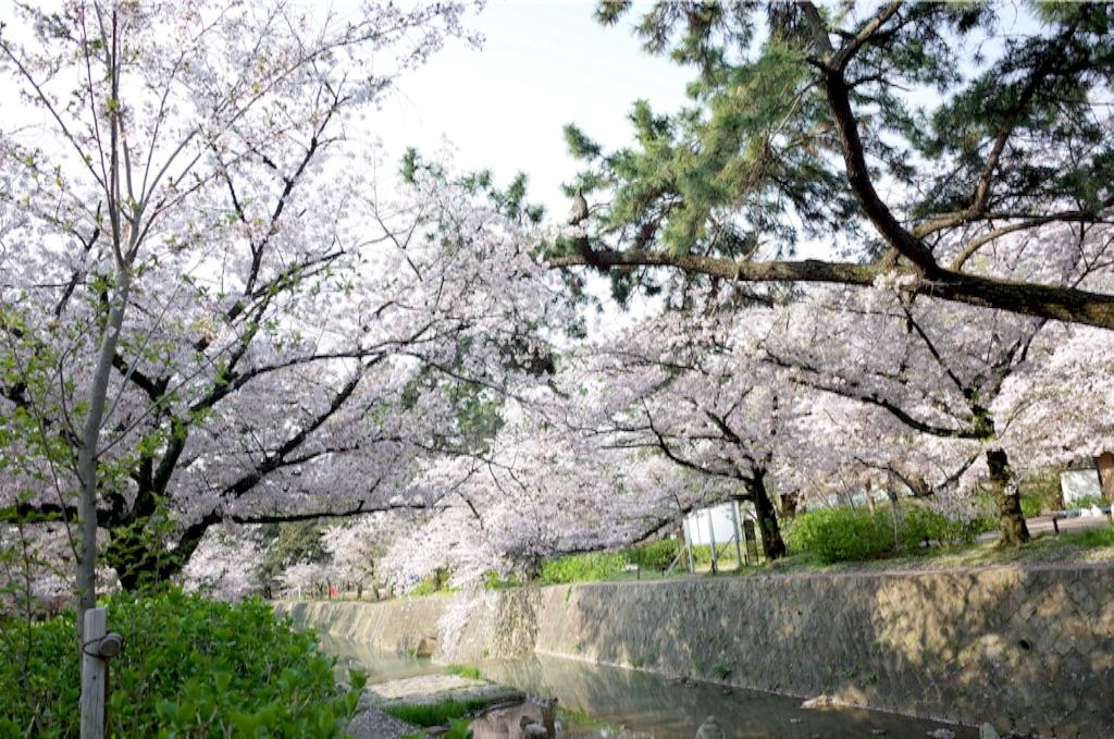 f:id:totorotabi:20170415084831j:image