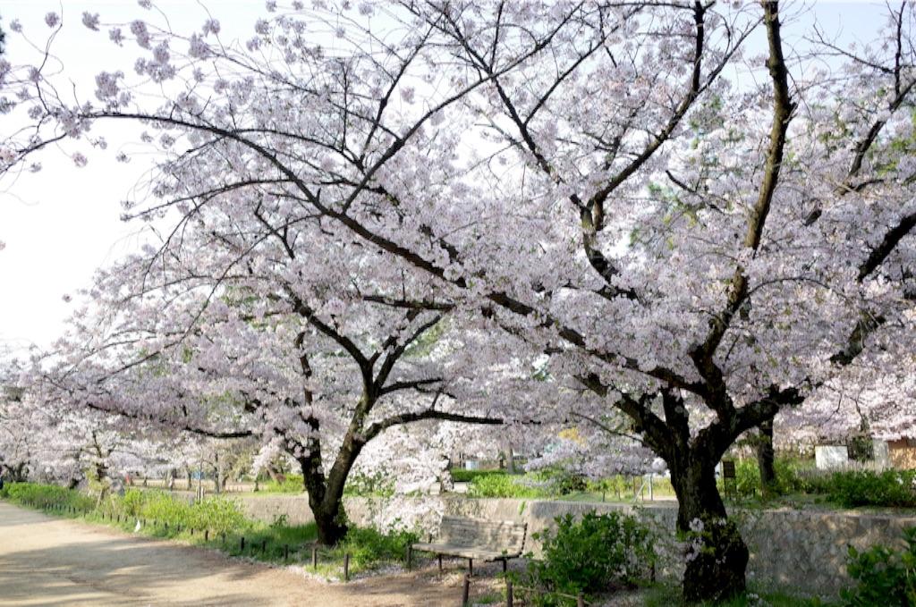 f:id:totorotabi:20170415084921j:image