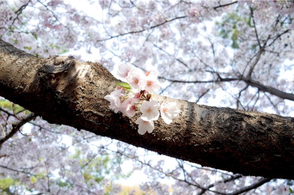f:id:totorotabi:20170415085011j:image