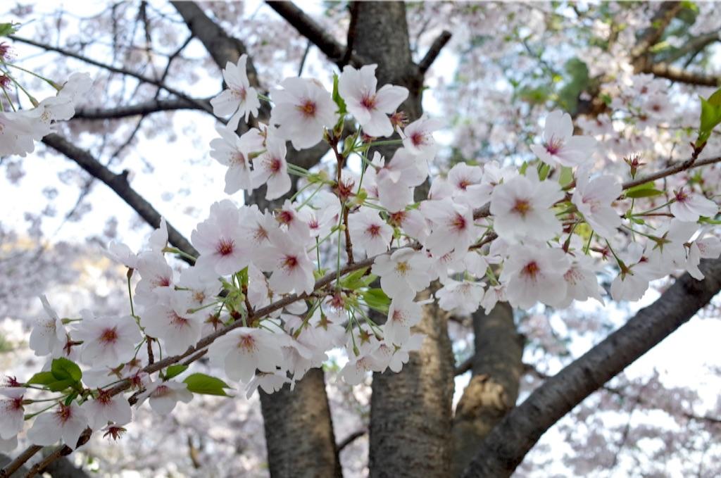 f:id:totorotabi:20170415085030j:image