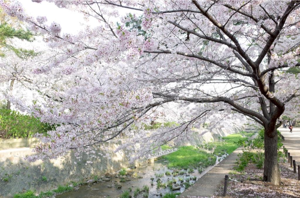 f:id:totorotabi:20170415085043j:image