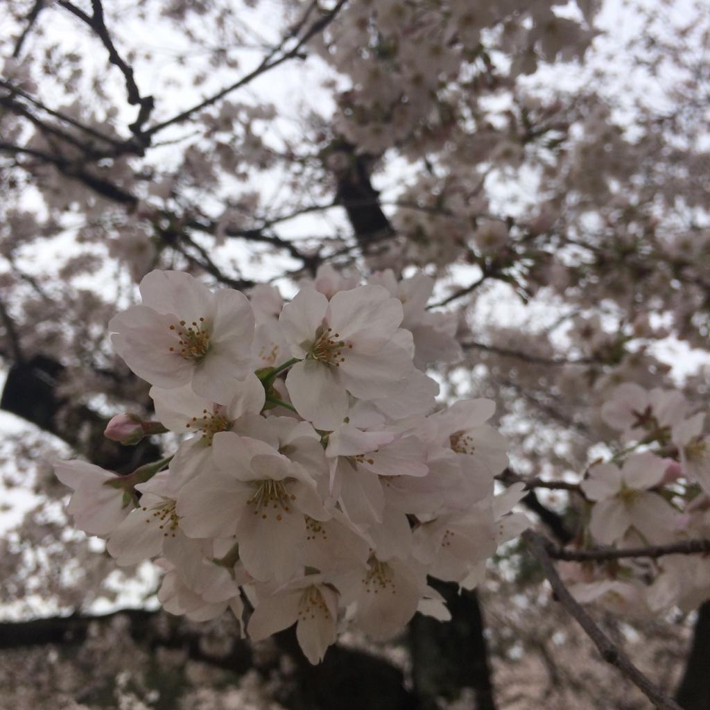 f:id:totorotabi:20170415182137j:plain