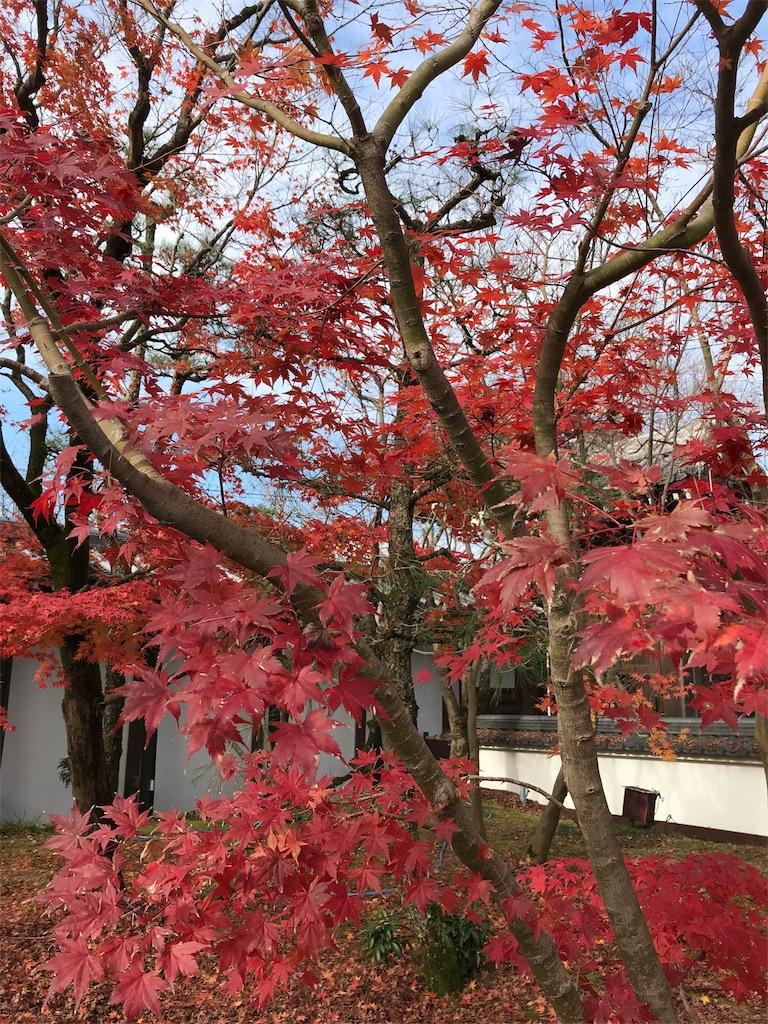 f:id:totorotabi:20181229134846j:image