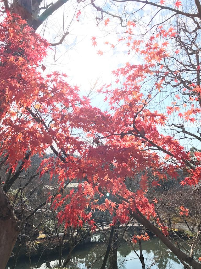 f:id:totorotabi:20181229134850j:image