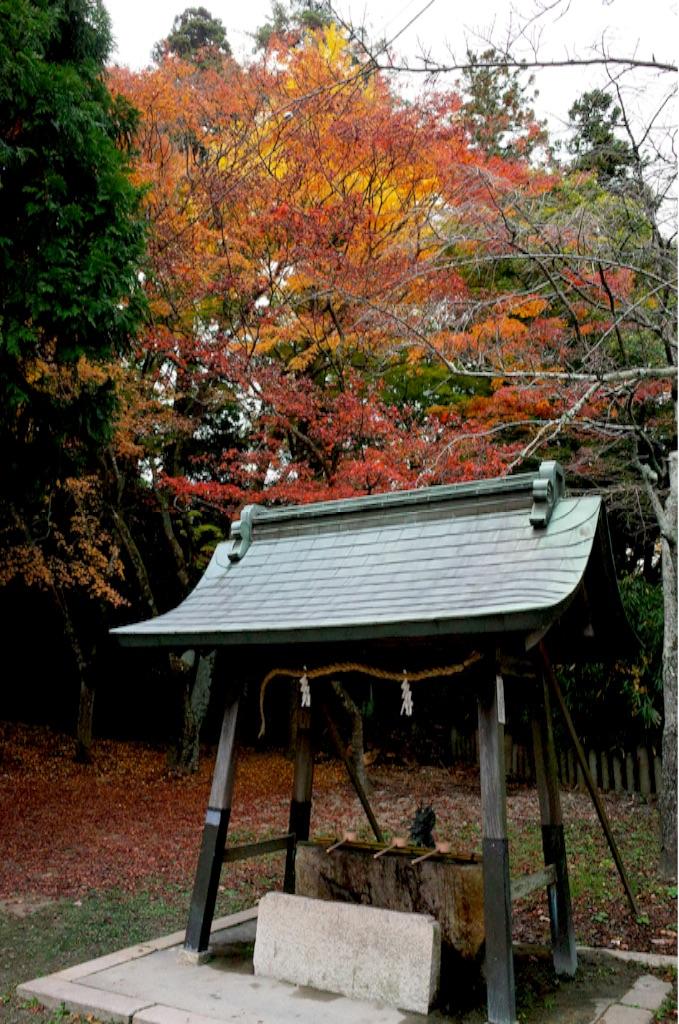 f:id:totorotabi:20190414232613j:image