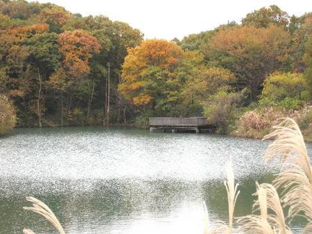 築池水舞台