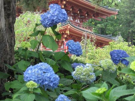 紫陽花と五重塔