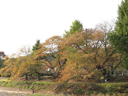 対岸は綾南公園