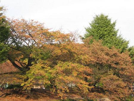 稜南公園の紅葉