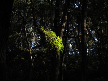 午後・雑木林