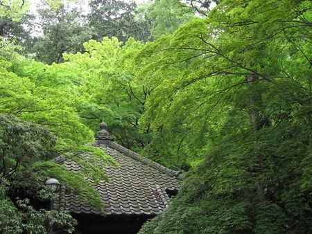 新緑の中のお堂