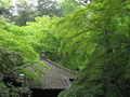 [春][新緑][寺]新緑の中のお堂