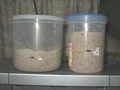 [パン][酵母]サワー種発酵中