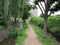 団地の中の水辺の小道