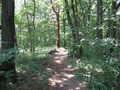 [桜ヶ丘公園]森の小道