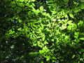 [桜ヶ丘公園][夏]夏の陽射し