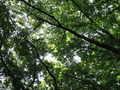 [桜ヶ丘公園][夏]夏の雑木林