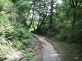 [長沼公園]霧降の道を登る