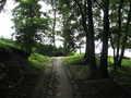 [長沼公園]霧降の道から野猿の尾根道