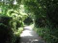 [長沼公園]野猿の尾根道