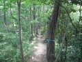 [長沼公園]西尾根を進む