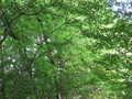 [長沼公園]でも緑が綺麗