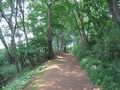 [長沼公園]野猿の尾根道を東へ進む