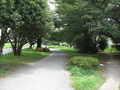 [玉川上水緑道]昭和の森辺りは上水の上は公園
