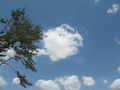 [武蔵野の森公園][空][雲]あつい…