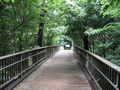 [浅間山公園]きすげ橋