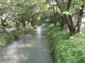 [水辺][玉川上水緑道]玉川上水