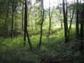 [小宮公園]雑木林