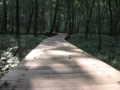 [小宮公園]木道