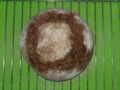 [パン]ライ麦200g全粒粉200g水260g塩6g