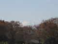[秋][昭和記念公園][富士山]富士山がちらり