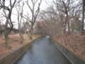 [玉川上水緑道][秋]冬間近
