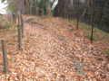 [玉川上水緑道][秋]落ち葉つもる道