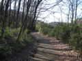 雑木林を歩く