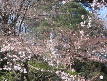 観音様、桜先始め