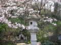 [春][桜][寺]咲き始め@高幡不動尊
