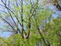 [春][新緑][かたらいの道]